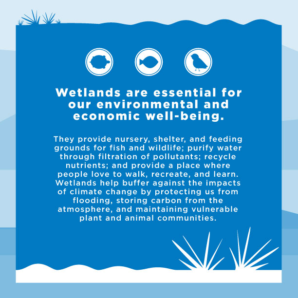 Wetlands Are Essential