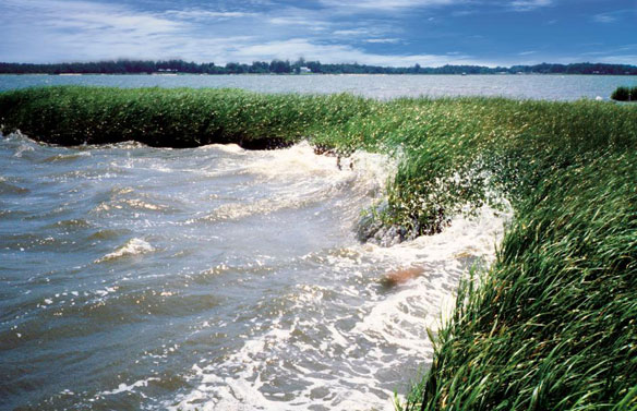 Coastal wetlands can serve as sea level rise buffers