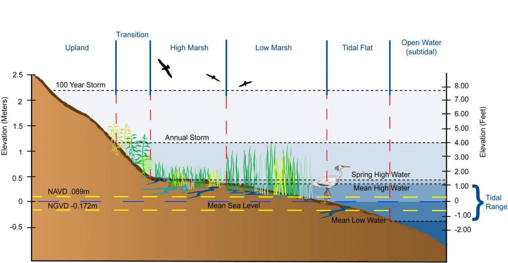 tides_wetlands_elevation